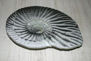 ammonit_20110630_224106_IMG_2322